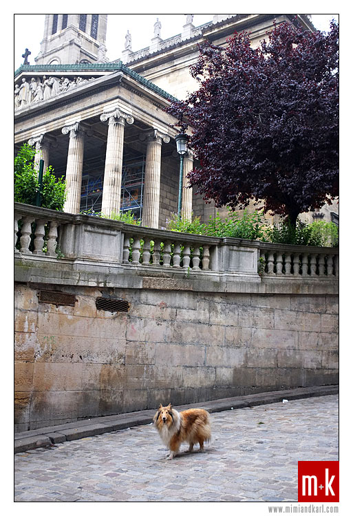 Paris Dog