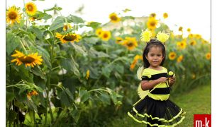 Protected: Katy Bee and the Sunflowers in UP